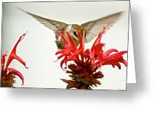 The Eye Of The Hummingbird Greeting Card