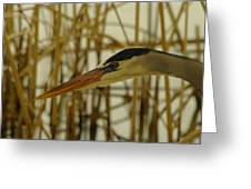 The Face Of A Heron Greeting Card