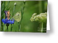 The Faerie And The Cabbage Butterfly Greeting Card