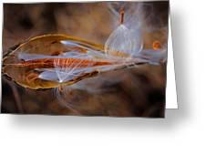 The Fairies Of The Milkweed Emerge Greeting Card