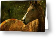 The Fairytale Horse Greeting Card