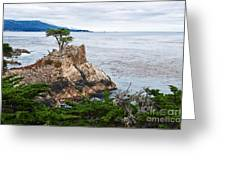 The Famous Lone Cypress Tree At Pebble Beach In Monterey California Greeting Card