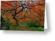 The Famous Tree At Portland Japanese Garden Greeting Card