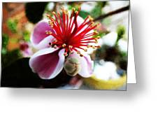 the Feijoa Blossom Greeting Card