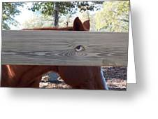 The Fence Eye Greeting Card