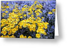 The Field Of  Wonder Greeting Card