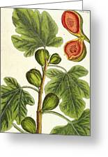 The Fig Tree Greeting Card