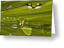 The First Rain Greeting Card