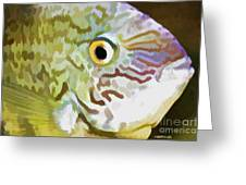 The Fish Greeting Card
