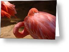 The Flamingo Wakens Greeting Card