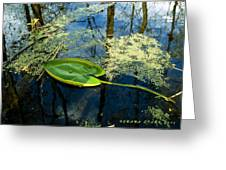 The Floating Leaf Of A Water Lily Greeting Card