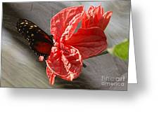 The Flower And The Butterfly Greeting Card