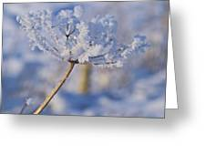 The Flower Crystal Greeting Card by Dave Woodbridge