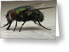 The Fly Macro Greeting Card
