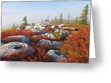 The Fog Clears At Dolly Sods Greeting Card
