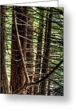 The Forest Combed By The Wind In The Lake Greeting Card