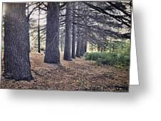 The Forest Of A Thousand Stories Greeting Card