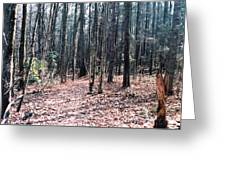 The Forest Path Greeting Card