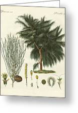 The Four-flapped Casuarina Greeting Card