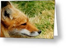 The Fox 7 Greeting Card
