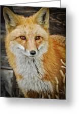 The Fox 8 Greeting Card