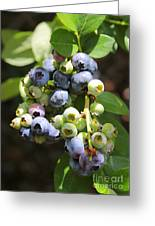 The Freshest Blueberries Greeting Card