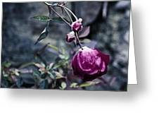 The Friday The 13th Rose Greeting Card