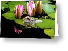 The Frog Greeting Card