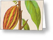 The Fruit Of The Cocoa (or  Chocolate) Greeting Card