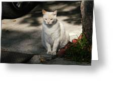 The Garden Cat Greeting Card