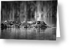 The Gator Greeting Card
