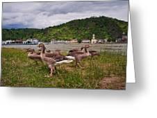 The Geese Of St Goar Am Rhein Greeting Card