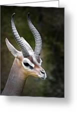 The Gerenuk Greeting Card