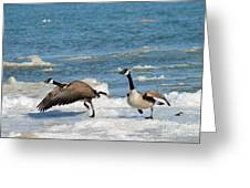 The Getaway Or Silly Goose Greeting Card