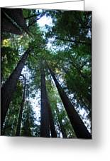 The Giant Redwoods I Greeting Card