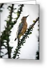 The Gila  Woodpecker Greeting Card