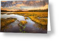 The Glades At Sunset Greeting Card