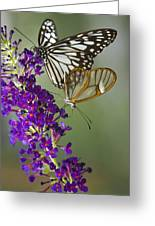 The Glasswing And A Friend  Greeting Card