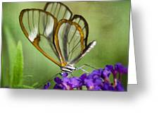 The Glasswing  Greeting Card