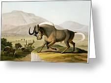 The Gnoo, 1804 Greeting Card