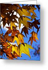 The Golden Hues Of Autumn  Greeting Card