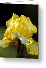 The Golden Iris Greeting Card