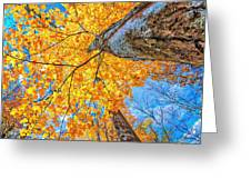 The Gorgeous Fall Greeting Card