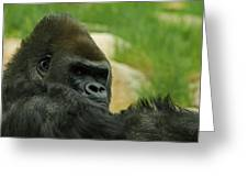 The Gorilla 2 Greeting Card