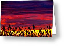 The Grasses Reach  Greeting Card by Q's House of Art ArtandFinePhotography