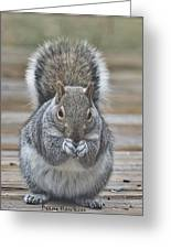 The Gray Squirrel Greeting Card