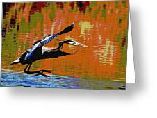 The Great Blue Heron Jumps To Flight Greeting Card