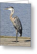The Great Blue Heron Photo Greeting Card