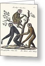 The Great Gibbon Greeting Card