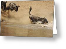 The Great Migration Wildebeest Crossing Greeting Card